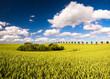 Obrazy na płótnie, fototapety, zdjęcia, fotoobrazy drukowane : Wiosenne pole