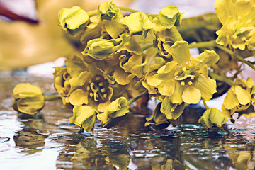 yellow flowers reflected spray water