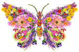 Fototapeta Butterfly from summer flowers