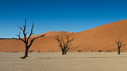 Dead trees and Red Sand Dunes