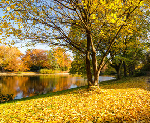 Autumn park with silent lake :)