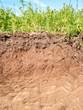 Leinwanddruck Bild - Querschnitt der verschiedenen Bodenschichten des Erdreich