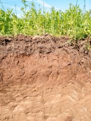 Querschnitt der verschiedenen Bodenschichten des Erdreich