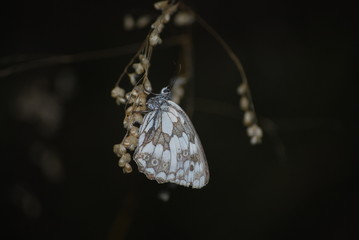 Butterfly at dark backgrounds