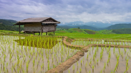 time lapse terrace rice farm and nimbus clouds floating