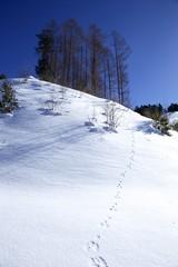 冬山の動物の足跡