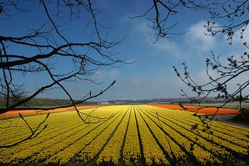 Tulipani verso l'infinito