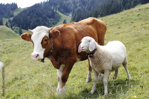 canvas print picture Kuh und Schaf