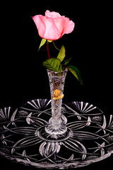 Ping rose in crystal vase