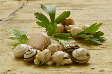 Bovoeti Bovoletti Cucina veneta Snails Lumachine di terra