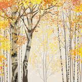 Fototapeta Birch grove in autumn time
