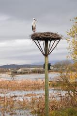 White stork on a nest, Salburua park, Vitoria (Spain)