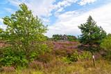 Heideblüte, Schafstall