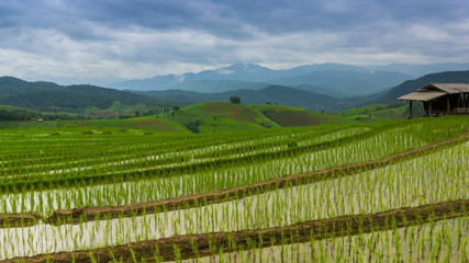 time lapse terrace rice farm and nimbus cloud floating of chiang