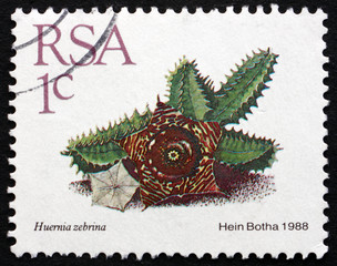 Postage stamp South Africa 1988 Huernia Zebrina, Succulent Plant