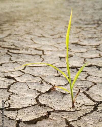 Fotobehang Droogte Plant struggling for life at drought land backlight