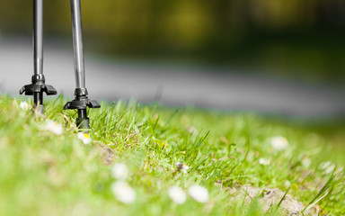 Nordic walking. Gray sticks on grass in park