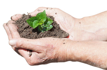 male hands with soil and green sprout