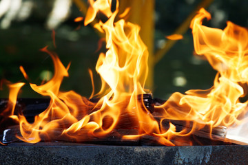flames of burning wood in brazier