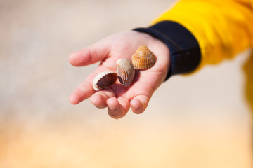 Close up of child hands holding seashells