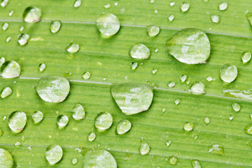 rain drops on green leaf of iris close up