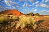 Desert landscape with red sand dunes, Sossusvlei