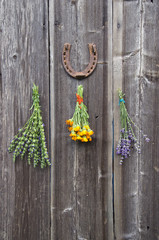 fresh medical herbs lavender, marigold  and hyssop on  wall