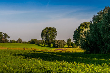 Zons - am Niederrhein