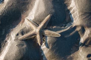 Starfish on sand,Nature background