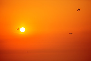 Morning sunrise and flying birds