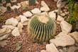 Round cactus.