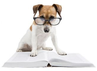 Smart dog reading book