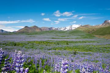 Vatnajökull Gletscher und Vulkan