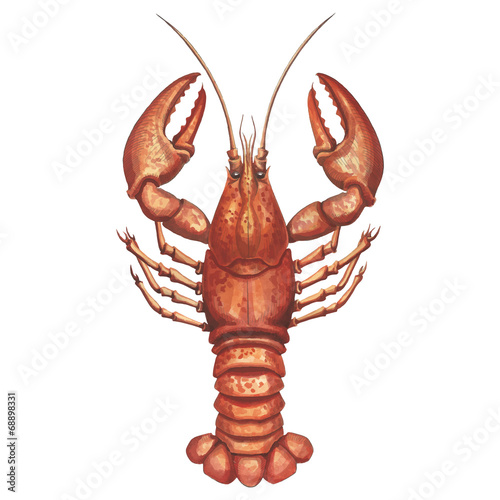 Watercolor  lobster - 68898331