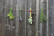 medical herbs flowers bunch  on old wooden wall