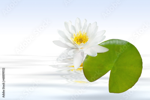 Plexiglas Water planten weiße Seerose mit Wasser