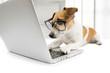 computer dog - 68901718