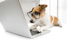 "Постер, картина, фотообои ""computer dog"""