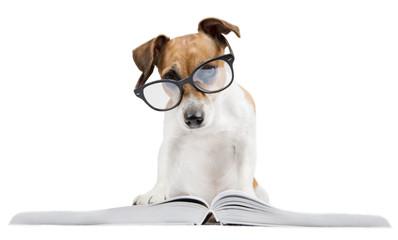 Smart dog back to school