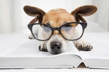 falling asleep tired reading books dog