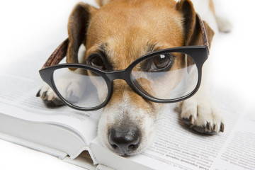 Tired reading dog. Back to school