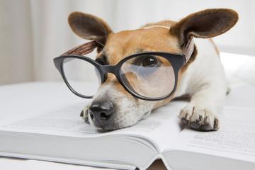 Tired reading books study dog