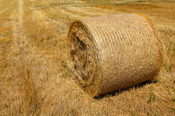 Straw roll bale on the farmland in sunny day