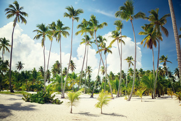 palms in Dominican