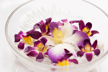 Orchid flower floating in water in a glass bowl
