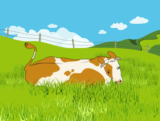 Rotbunte Kuh auf der Weide