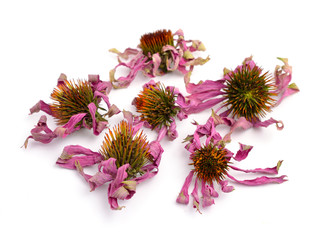 Dried flowers Echinacea purpurea