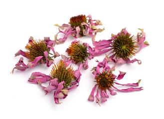 Dried flowers Echinacea purpurea