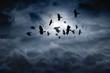 Leinwanddruck Bild - Flying ravens
