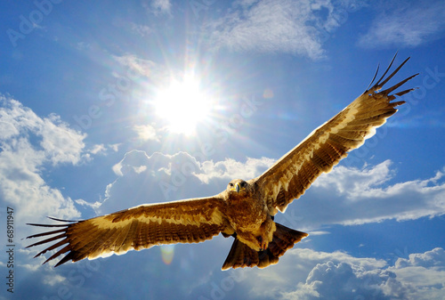 Foto op Canvas Eagle Steppe Eagle